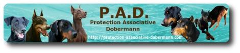 Doberman PAD adoption